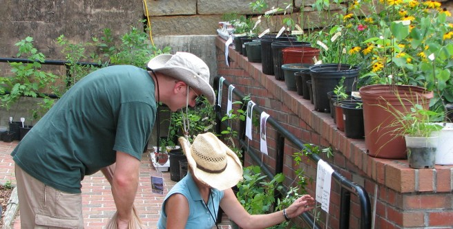 South Carolina Native Plant Society Plant Sale