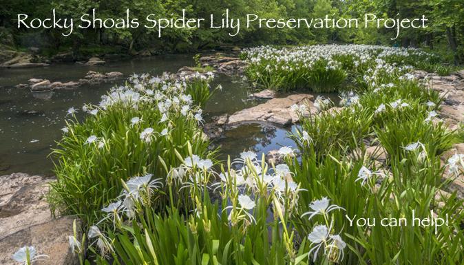 sharpton-lily-photo1_674x385